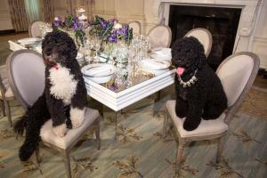 FLOTUS dogs