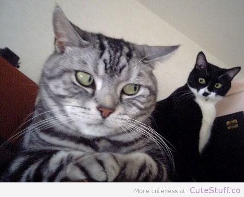 very_suspicious_cat