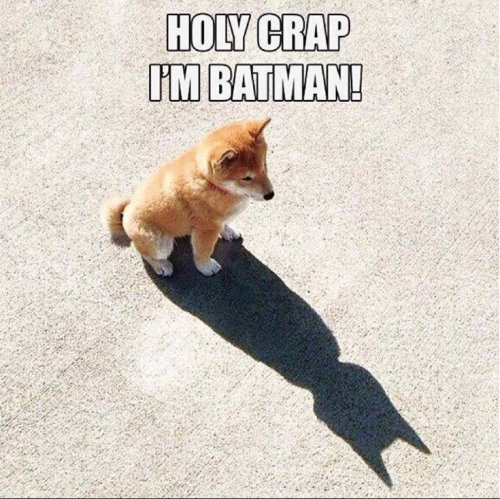 735x734xBatman-Dog-copy_jpg_pagespeed_ic_SRH3BG7Snw