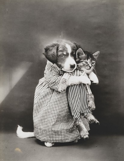 Old-Cat-Photos-23 aceofspades