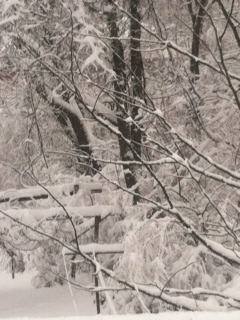 March snow3