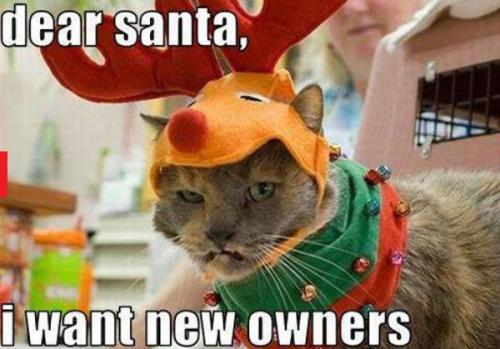 cat crawdad