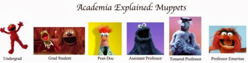 Academic-Muppets