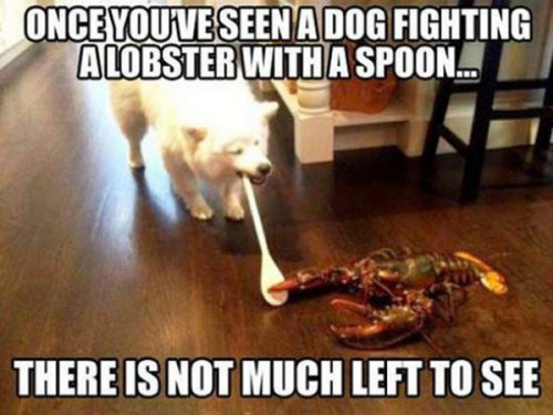 dog-spoon-lobster_thumb3